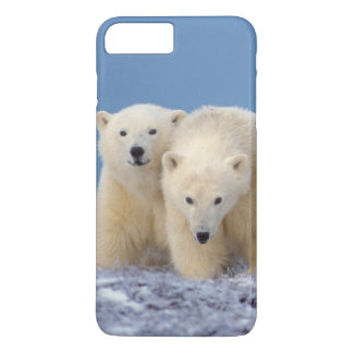 polar bear, Ursus maritimus, sow with cubs iPhone 8 Plus/7 Plus Case