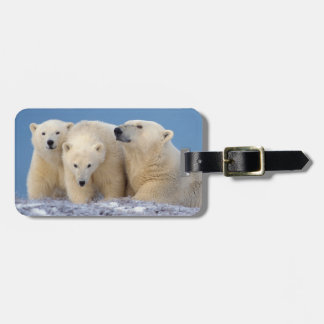 polar bear, Ursus maritimus, sow with cubs Luggage Tag