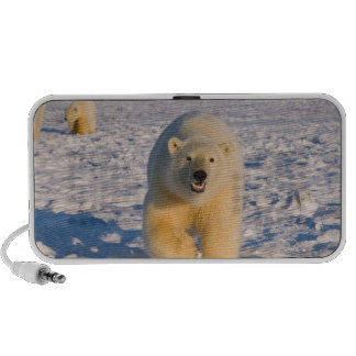 polar bear, Ursus maritimus, sow with cubs on 2 Travel Speakers