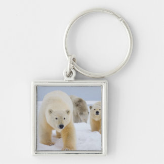 polar bear, Ursus maritimus, sow with cubs on 3 Silver-Colored Square Key Ring