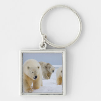 polar bear, Ursus maritimus, sow with cubs on Silver-Colored Square Key Ring