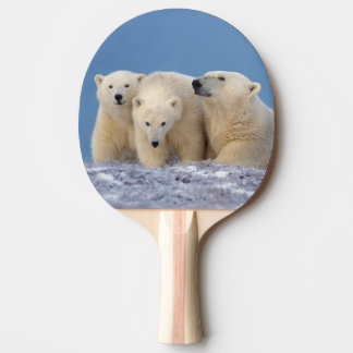 polar bear, Ursus maritimus, sow with cubs Ping Pong Paddle