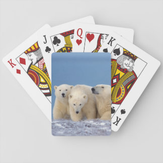 polar bear, Ursus maritimus, sow with cubs Playing Cards