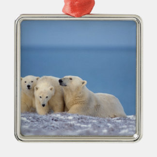 polar bear, Ursus maritimus, sow with cubs Silver-Colored Square Decoration