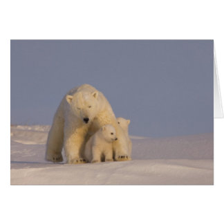polar bear, Ursus maritimus, sow with newborn 2 Greeting Card