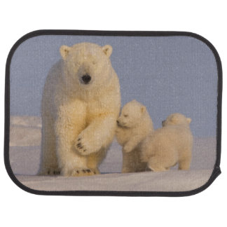 polar bear, Ursus maritimus, sow with newborn 3 Car Mat