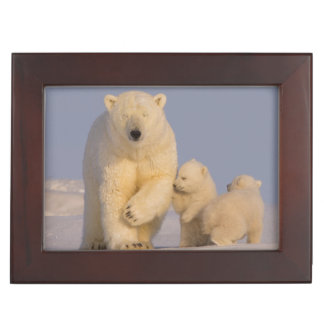 polar bear, Ursus maritimus, sow with newborn 3 Keepsake Box