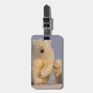 polar bear, Ursus maritimus, sow with newborn 3 Luggage Tag