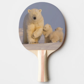 polar bear, Ursus maritimus, sow with newborn 3 Ping Pong Paddle