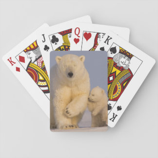 polar bear, Ursus maritimus, sow with newborn 3 Poker Deck