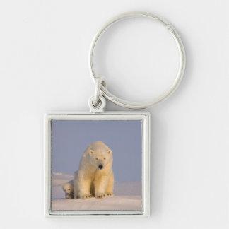 polar bear, Ursus maritimus, sow with newborn Silver-Colored Square Key Ring