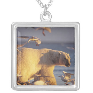 polar bear, Ursus maritimus, with Silver Plated Necklace