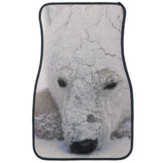 Polar Bear, Urus Maritimus, Arctic, Churchill, Car Mat