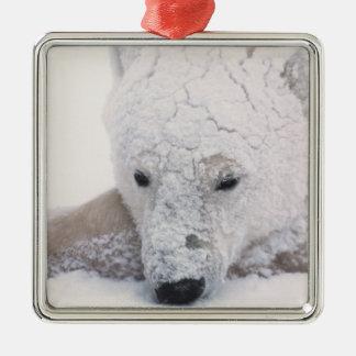 Polar Bear, Urus Maritimus, Arctic, Churchill, Christmas Ornament