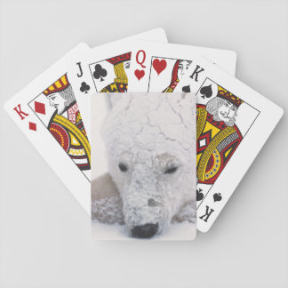 Polar Bear, Urus Maritimus, Arctic, Churchill, Poker Deck