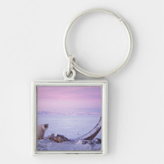 Polar bear with bowhead whale carcass on pack Silver-Colored square key ring