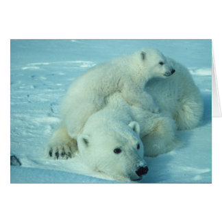 Polar bear with cub card