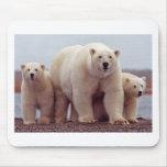 Polar Bear With Cubs 02 Mousepad