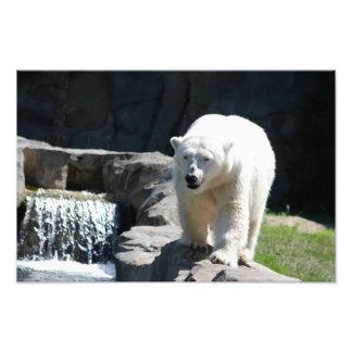 Polar Bear with Waterfall Photo Print
