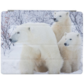 Polar Bears and Two cubs iPad Cover