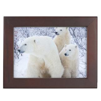 Polar Bears and Two cubs Keepsake Box