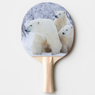 Polar Bears and Two cubs Ping Pong Paddle