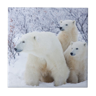 Polar Bears and Two cubs Tile