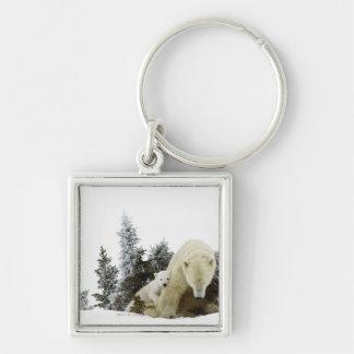 Polar Bears At Wapusk National Park Key Ring