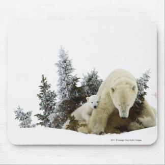 Polar Bears At Wapusk National Park Mouse Mat