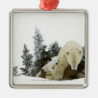 Polar Bears At Wapusk National Park Silver-Colored Square Decoration