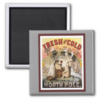 Polar Bears Drinking Lagers Square Magnet