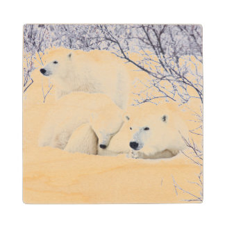 Polar Bears female and Two cubs 3 Wood Coaster