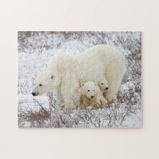 Polar Bears female and Two cubs Jigsaw Puzzle