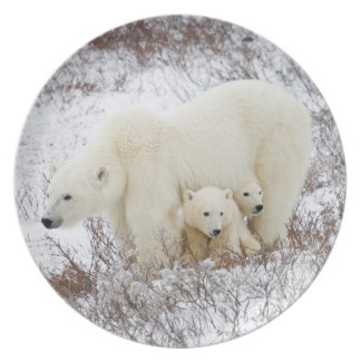 Polar Bears female and Two cubs Plate