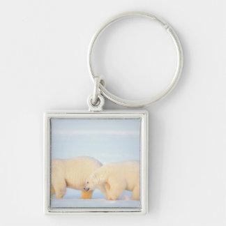Polar bears on frozen Arctic, 1002 coastal Silver-Colored Square Key Ring