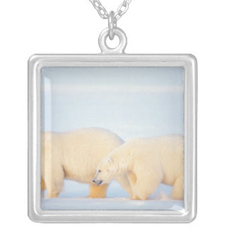 Polar bears on frozen Arctic, 1002 coastal Silver Plated Necklace