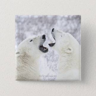 Polar Bears playing in the snow 15 Cm Square Badge
