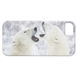 Polar Bears playing in the snow. iPhone 5 Case