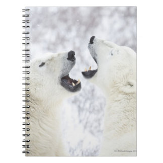 Polar Bears playing in the snow. Notebook