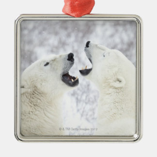Polar Bears playing in the snow Silver-Colored Square Decoration