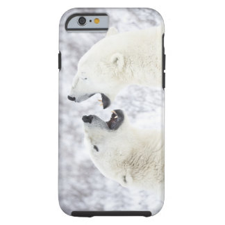 Polar Bears playing in the snow. Tough iPhone 6 Case