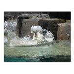 Polar Bears Post Cards