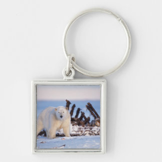 Polar bears scavenging on baleen whale bones, Silver-Colored square key ring