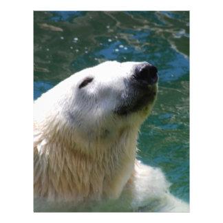 Polar bears smile flyer design