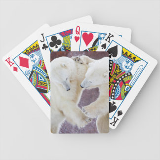Polar Bears sparring 2 Bicycle Playing Cards