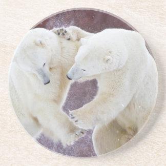 Polar Bears sparring 2 Coaster