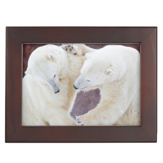 Polar Bears sparring 2 Keepsake Box