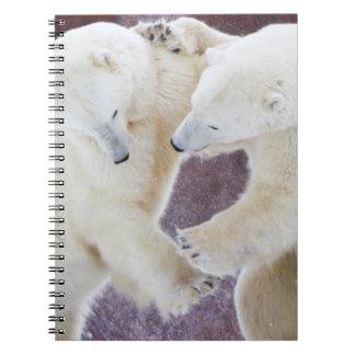 Polar Bears sparring 2 Spiral Notebook