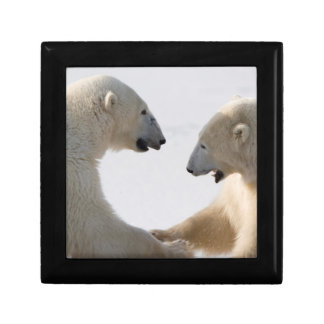 Polar Bears sparring Gift Box