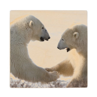 Polar Bears sparring Wood Coaster